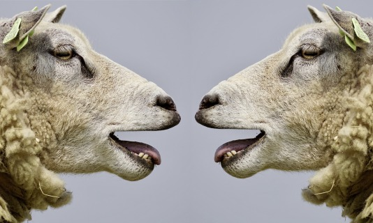 Two sheep looking at one another with mouths slightly open talking about how awesome it is that they hired a virtual assistant